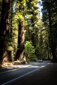 Avenue of the Giants copy