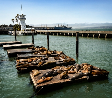Sea lions at the wharf copy