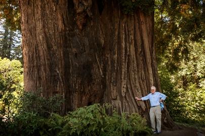 The Grandfather Tree copy