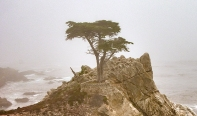The Lone Cypress 2